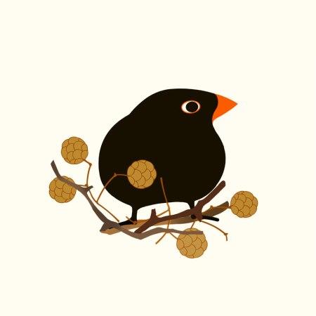 Svarttrosten, Blackbird